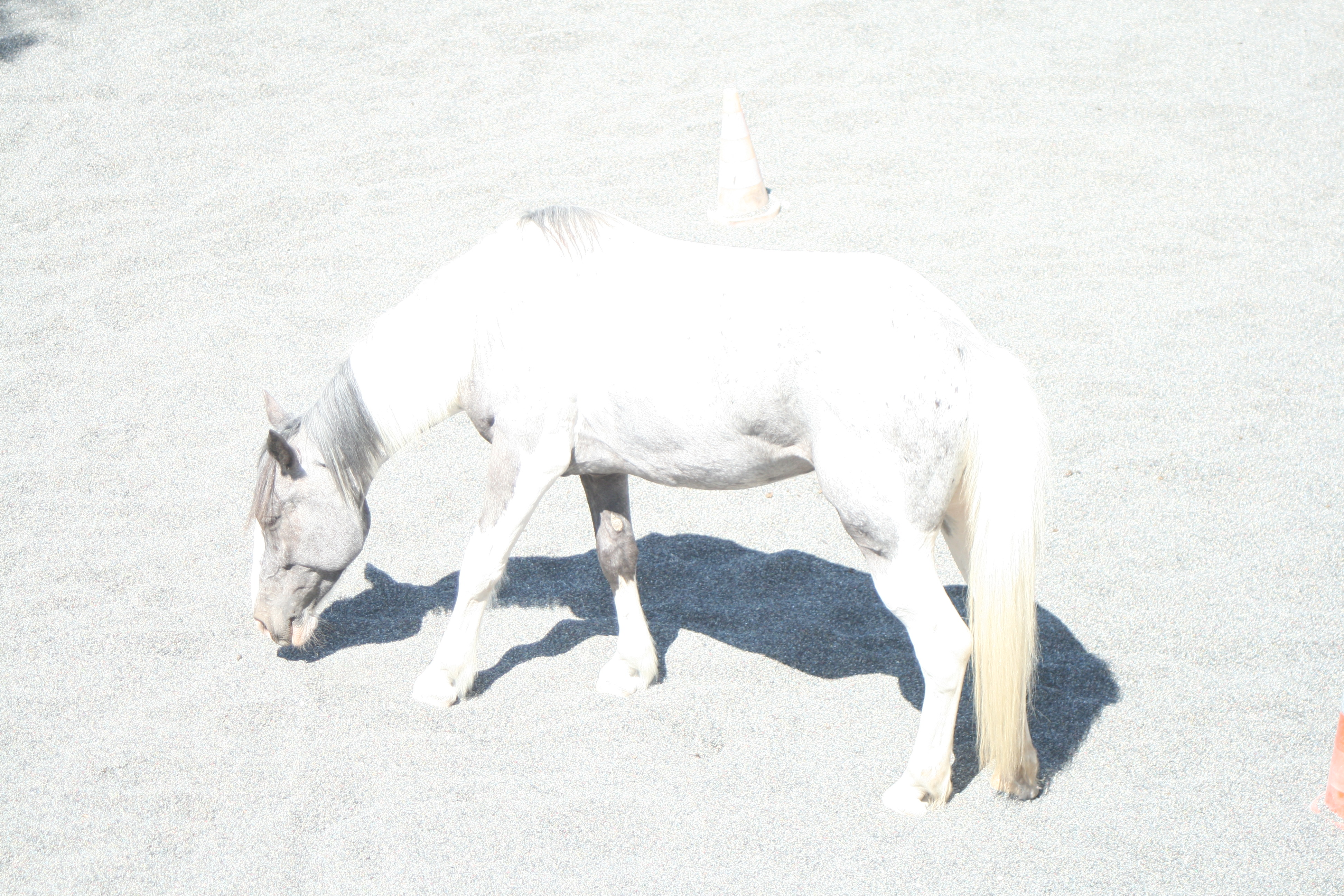 chevalcarire2.jpg